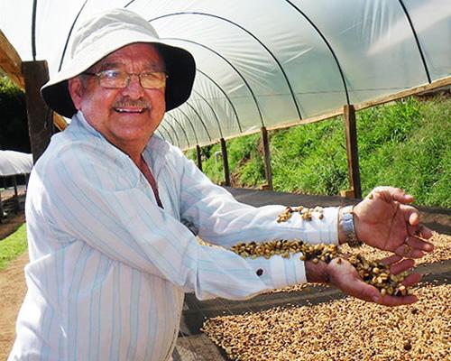 パウリーニョコーヒー生産者