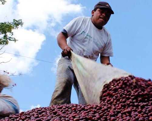 サンタ・フェリサコーヒー生産者