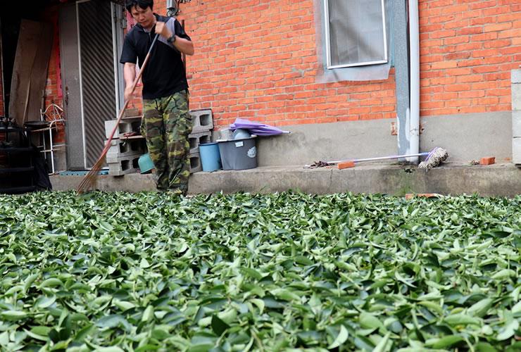 林農園の台湾烏龍茶 日光萎凋