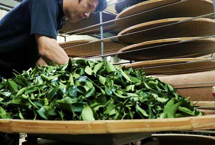 林農園の台湾烏龍茶 竹ざるで室内萎凋