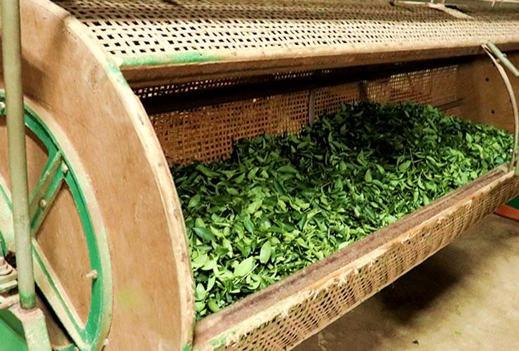 林農園の台湾烏龍茶 回転発酵
