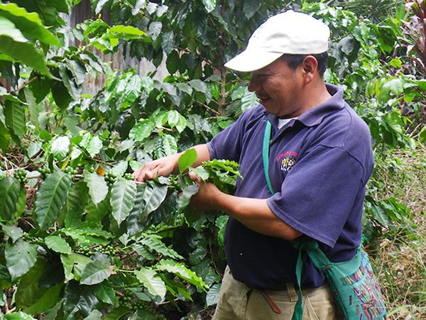 ブルボンコーヒー生豆