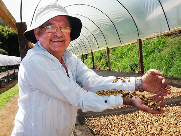 パウリーニョコーヒー生豆